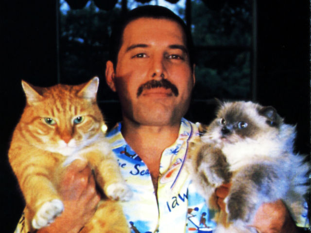 Freddy Mercury con gatos